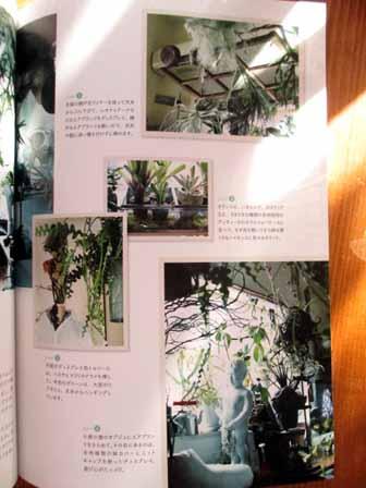 植物男子4