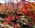 2013-11-21kasagiyama-1.jpg