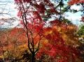 2013-11-21kasagiyama-3.jpg