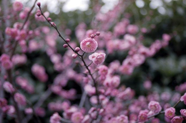 待つ春01b