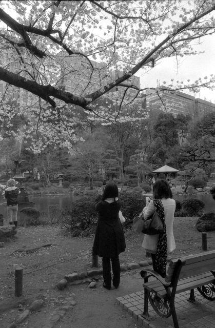 桜2012-02e