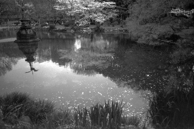 桜2012-02d