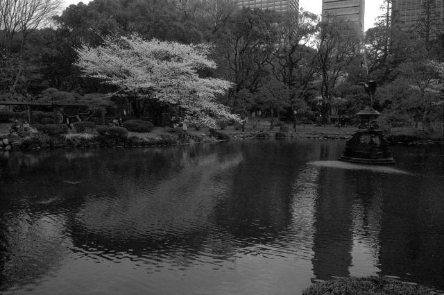 桜2012-02a
