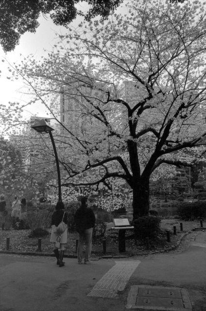 桜2012-02b