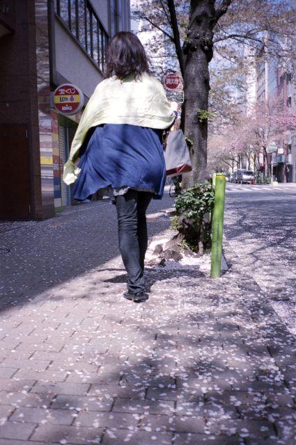 桜2012-06d