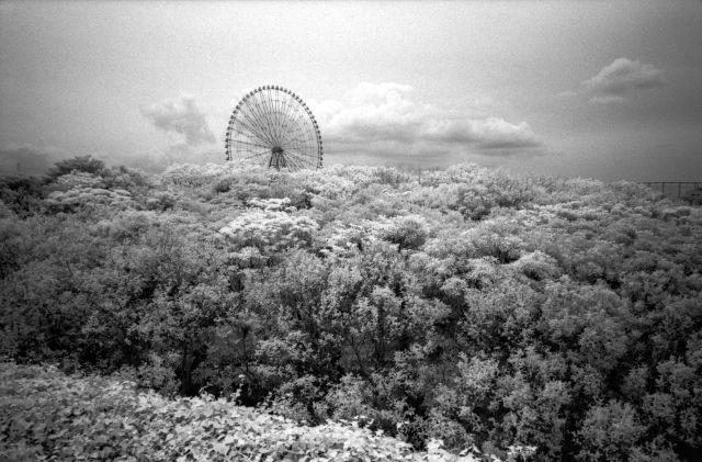 赤外線写真2012-01e