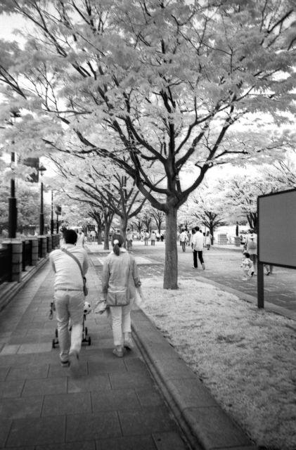 赤外線写真2012-01b