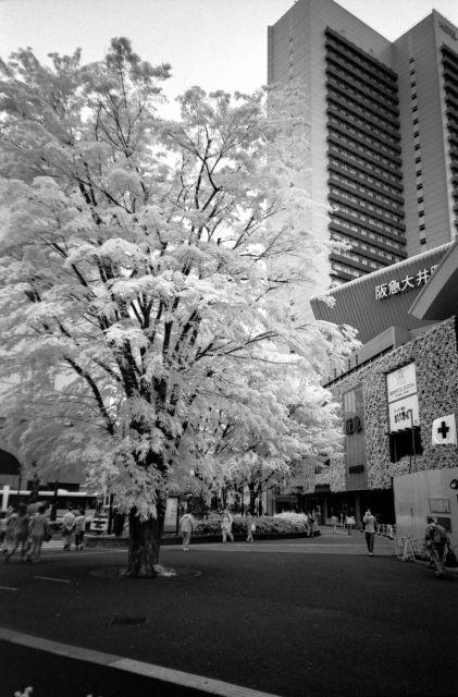 赤外線写真2012-01a