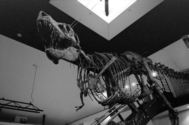 夏休みは恐竜01c