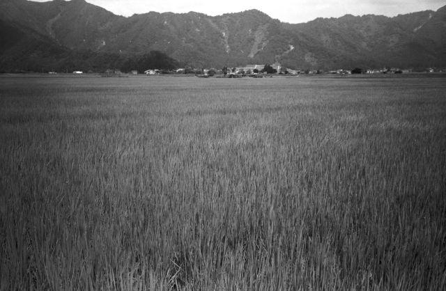 深山幽谷11b