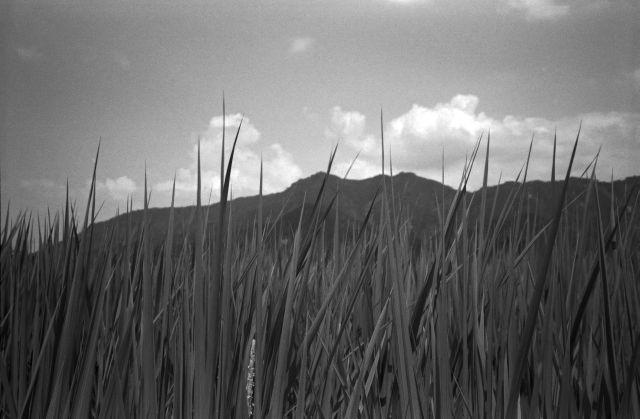 深山幽谷11a