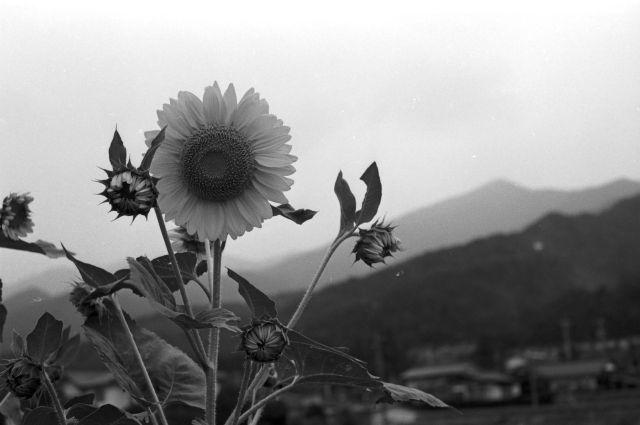 伊那の風景2012夏01a