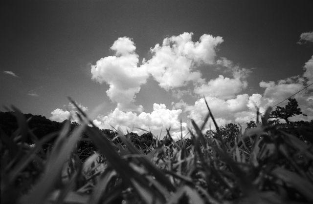 夏草や01a