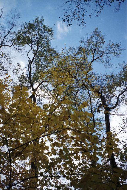 秋深し2012-03f