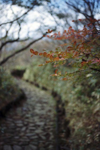 秋深し2012-03d