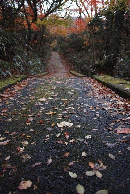 秋深し2012-05c