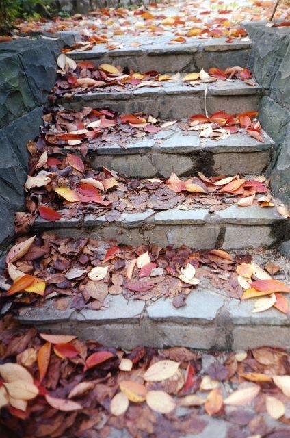 落ち葉と階段と01a