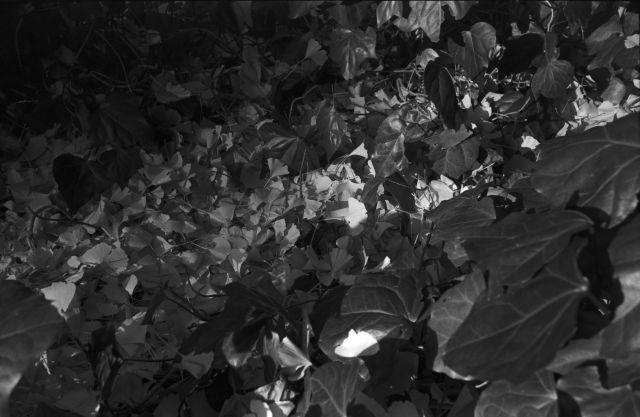秋深し2012-09a