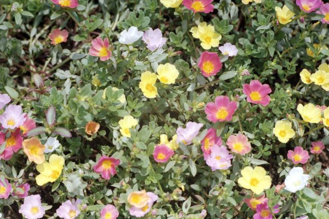 VitaminFlowers030a