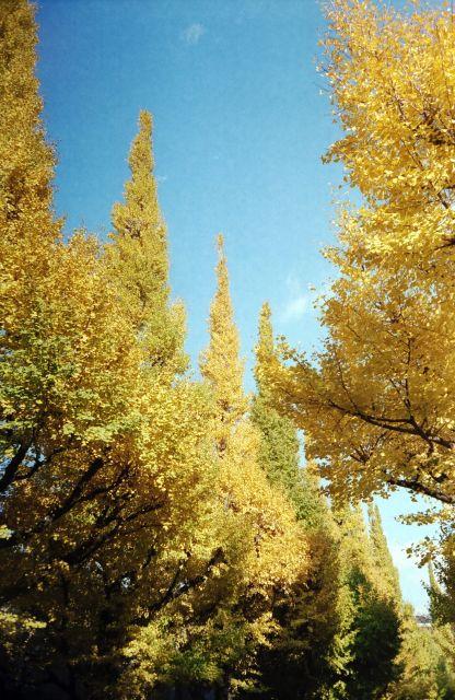 Yellow01d