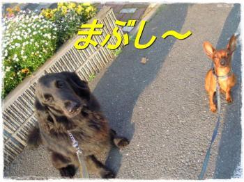 DSCN4158_convert_20120525013117.jpg