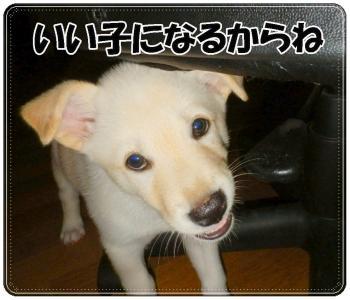 DSC_0296_convert_20120929205552.jpg