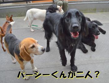 DSC_0580-001_convert_20120623152831.jpg