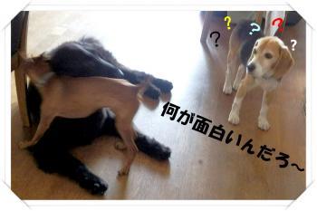 P8060133_convert_20120806100848.jpg