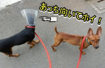 attimuitehoi_convert_20120727162417.jpg
