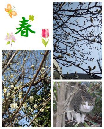 cats-2_convert_20120306204036.jpg