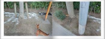 cats_convert_20120731155321.jpg