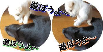 cats_convert_20120902141035.jpg