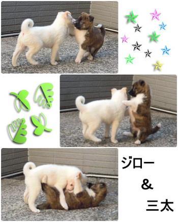 jyuudou_convert_20120429233112.jpg