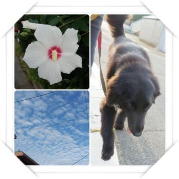 sora_convert_20120806100830.jpg