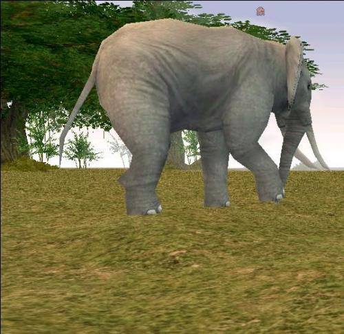 イリア動物 象 ひとり