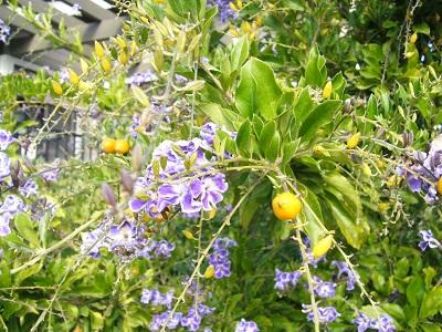 紫の花 アップ