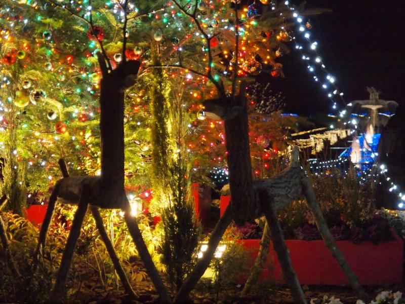 2012イルミ ・・・ 昭和記念公園