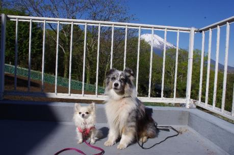 4富士山を背にくりとウィル