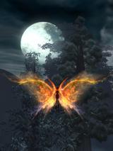 月夜飛行♪