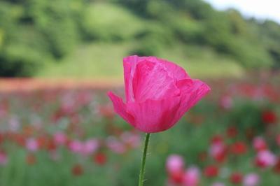 可愛い花だね。
