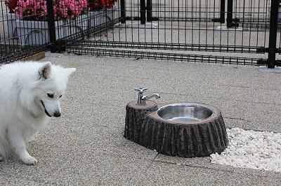 水飲み・・・