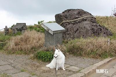 白馬・・・否白犬