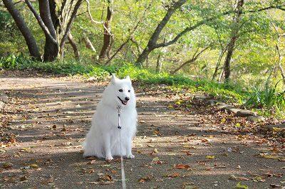 お散歩出発