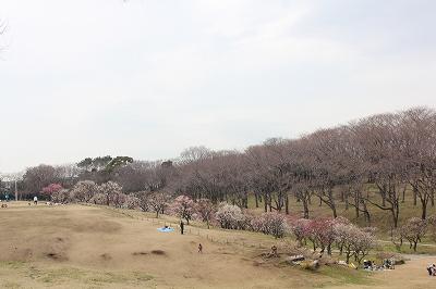 桜林の端っこに・・・