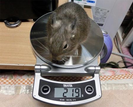 そらちゃん体重