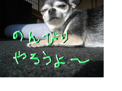 snap_wonderfullif365_201255232457.jpg