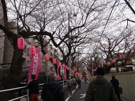 326 桜並木