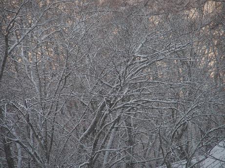 008 木は雪化粧
