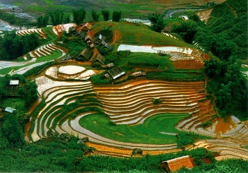 laocai2-LKMYTRE-RTCVBN.jpg