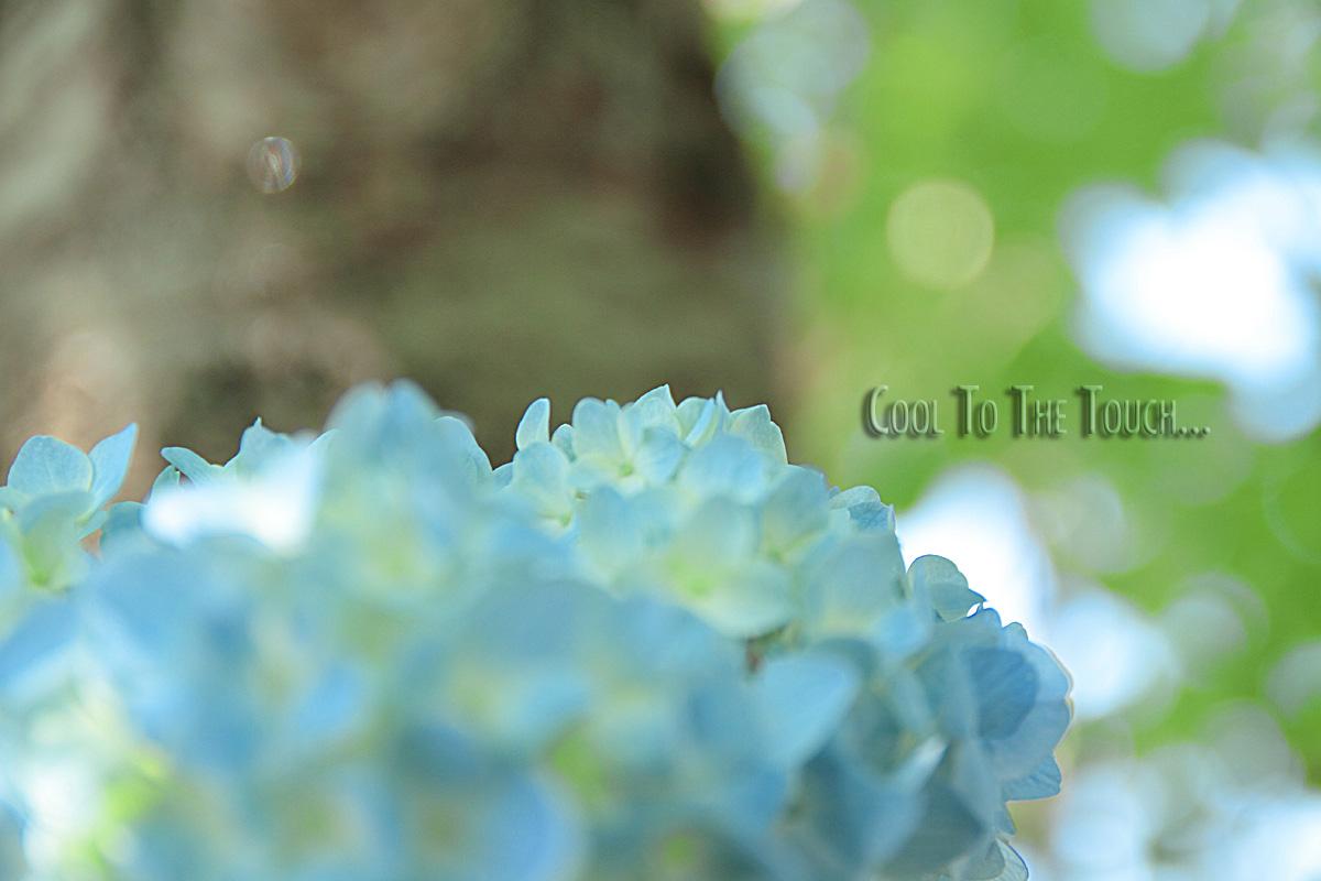 001_20100604194534.jpg